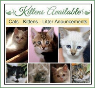 Cats Kittens for sale